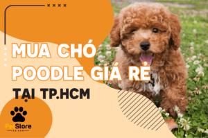 Chó Poodle giá rẻ TP.HCM