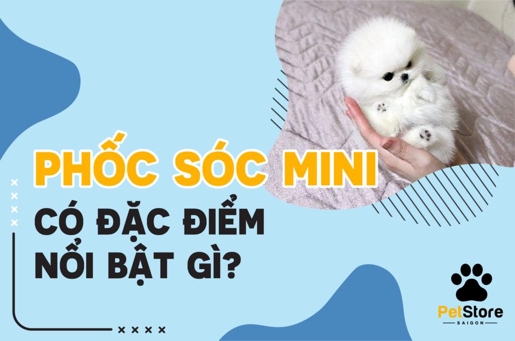 Chó Phốc Sóc mini và những đặc điểm nổi bật