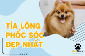 Tỉa lông cho Phốc Sóc đẹp nhất tại Pet Store Sài Gòn