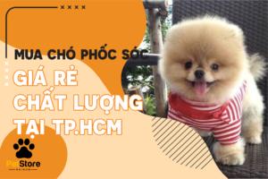 Chó Phốc Sóc tại TP.HCM