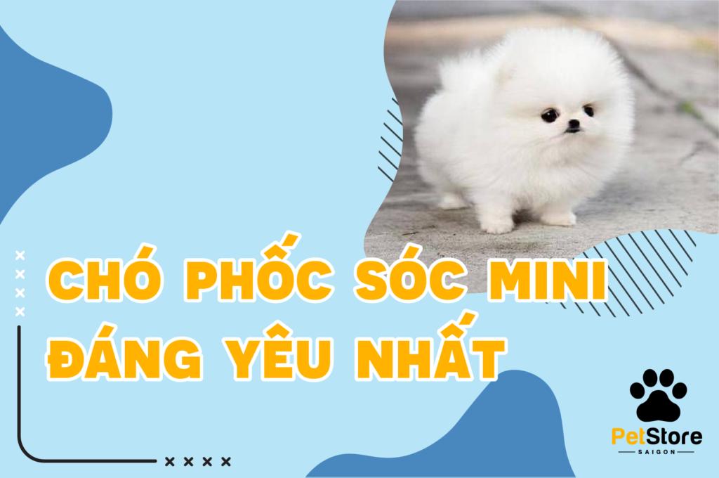 Chó Phốc Sóc mini đáng yêu