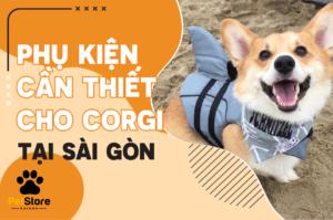 Phụ kiện cần thiết cho Corgi