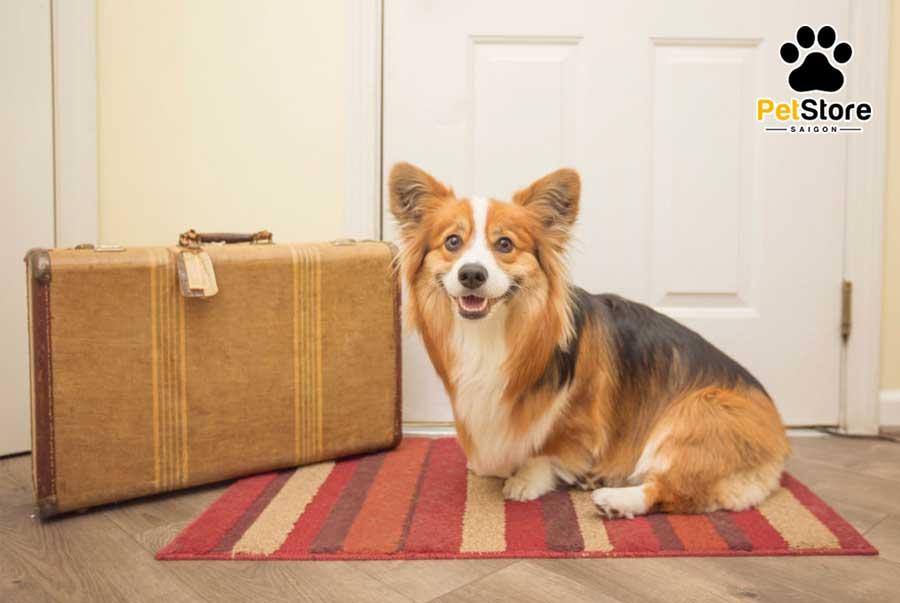 Chăm sóc thường xuyên để cún cưng có bộ lông mượt mà
