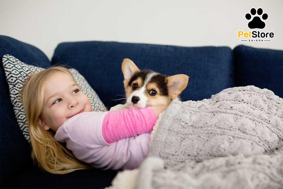 Corgi là một trong các loại chó rất thân thiện với trẻ nhỏ