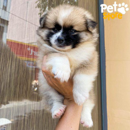 pom-pet-store