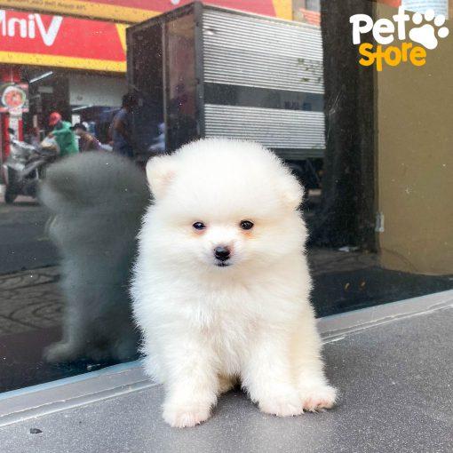 phốc-sóc-pet-store